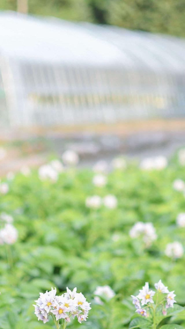 自家菜園の秋野菜